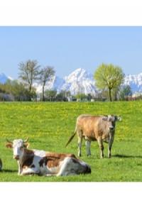 Alpeland-Fondue