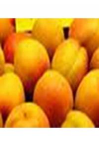 "Fondue ""Abricot"""
